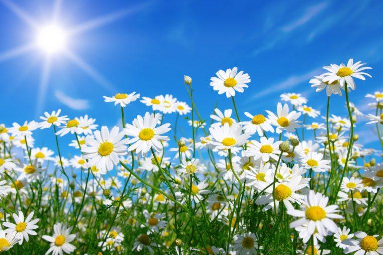ชีวิตของเด็กเหมือนดอกไม้